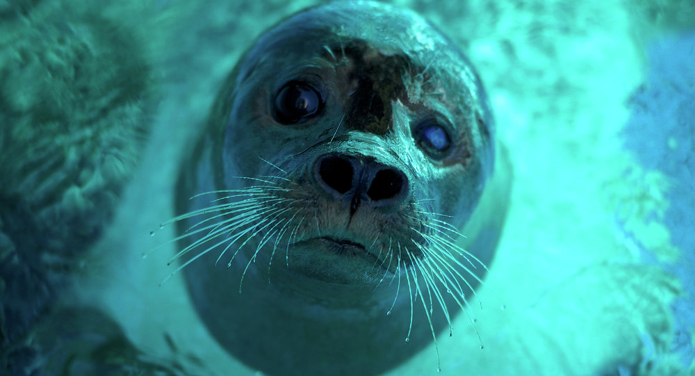 A seal cools off at Belgrade Zoo during a heatwave on July 21, 2015